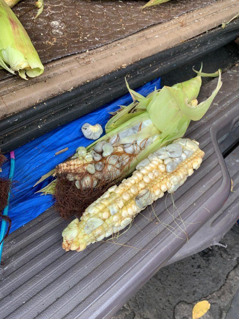 Black Gold Corn, Tepoztlan, Mexico ©2019, Cyndie Burkhardt