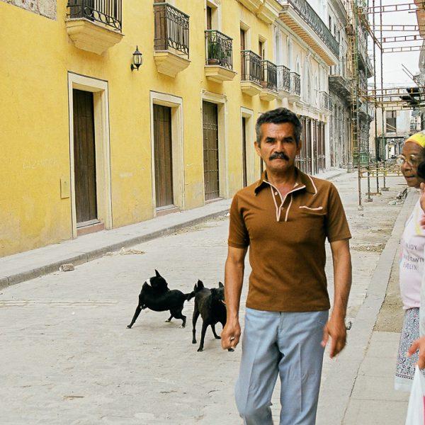 Street Dogs, Havana, Cuba, 1999 ©Cyndie Burkhardt.