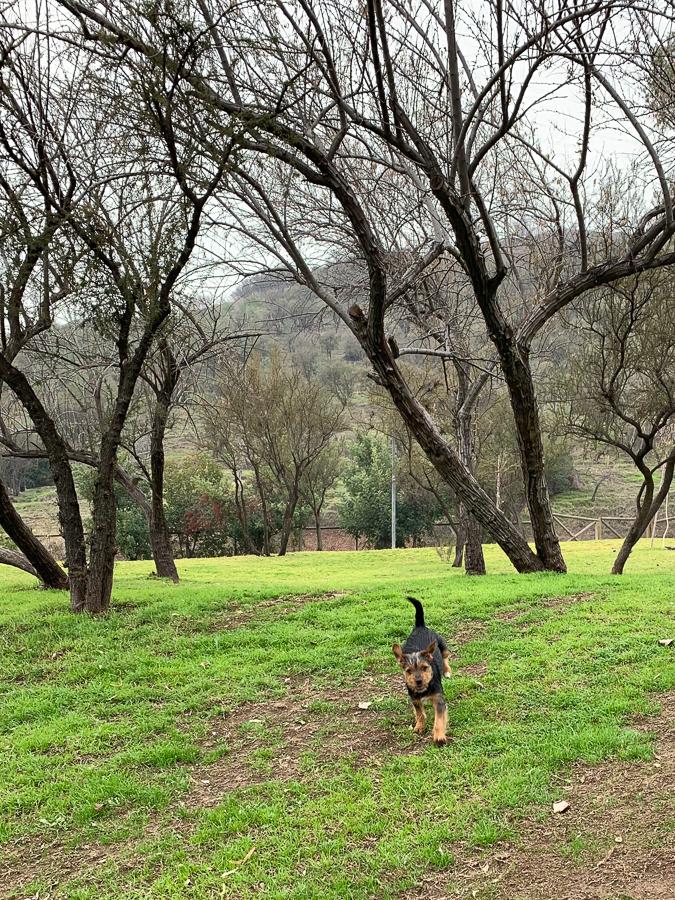 Puppy, Santiago, Chile ©2019, Cyndie Burkhardt.