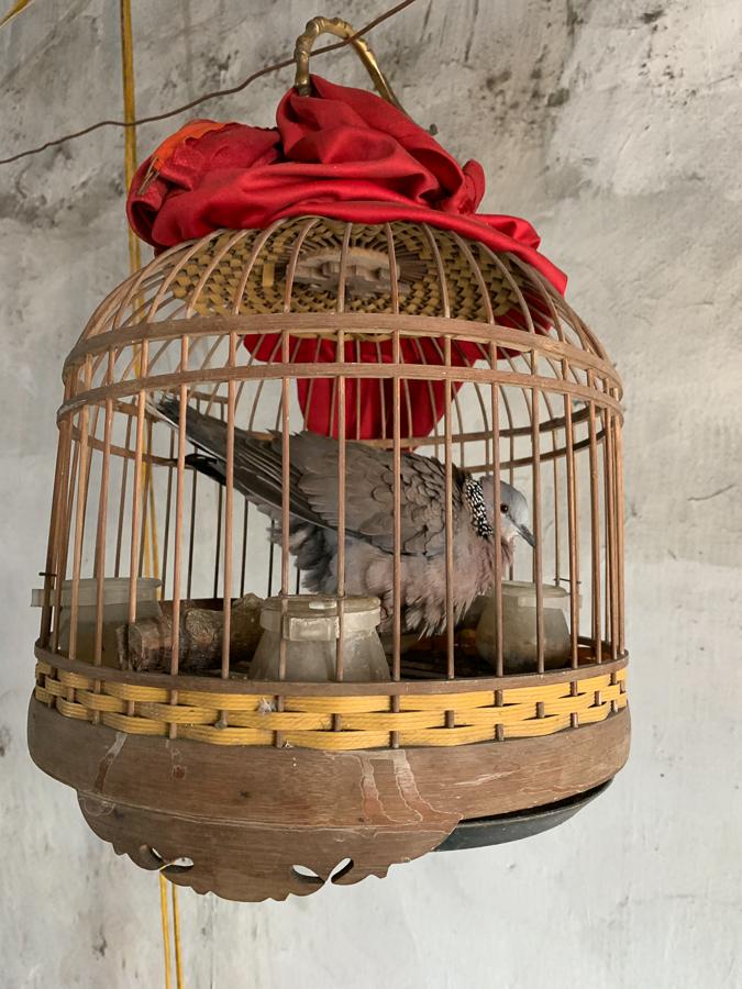 Bird, Da Sy Blacksmith Village, Hanoi, Vietnam, ©2019, Cyndie Burkhardt.