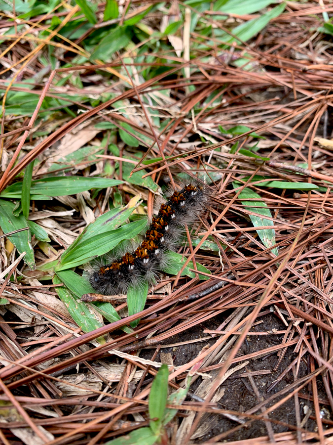 Worm at Angels Falls Mountain, Envigado, Colombia, ©2019, Cyndie Burkhardt.