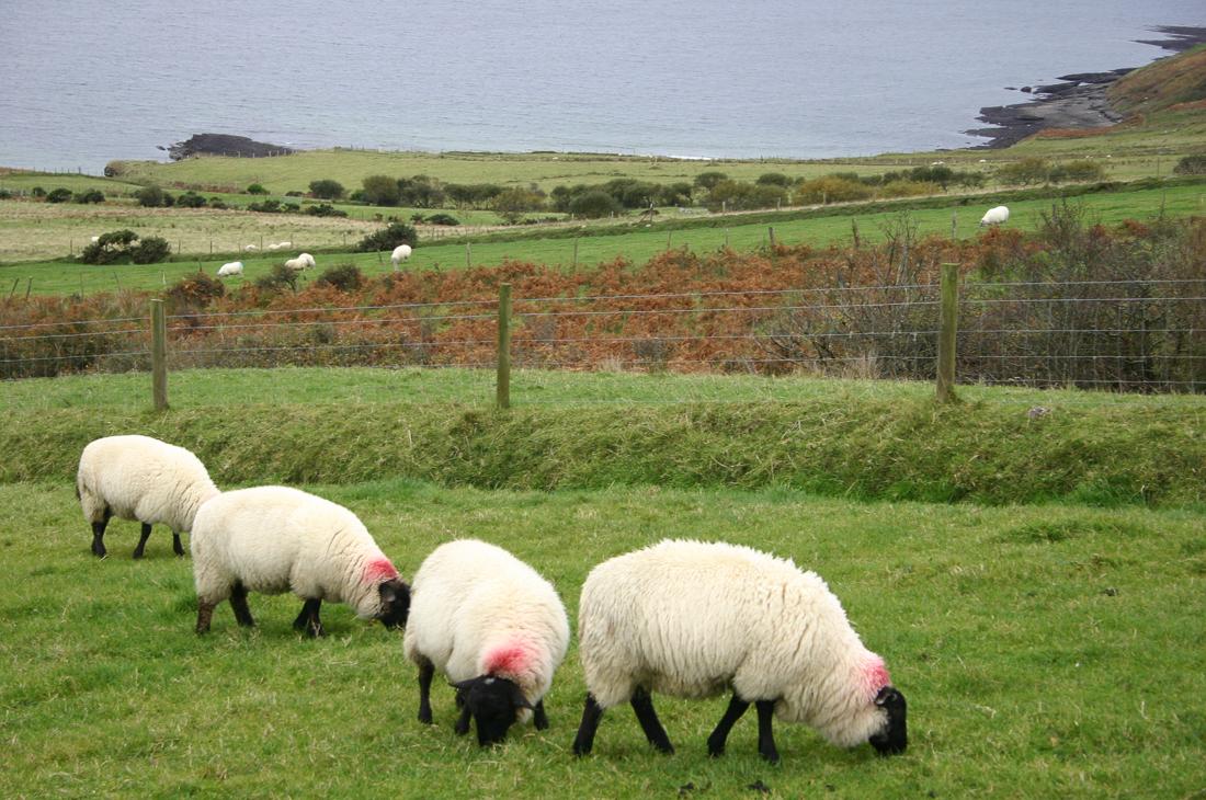 Donegal, Ireland ©Cyndie Burkhardt.