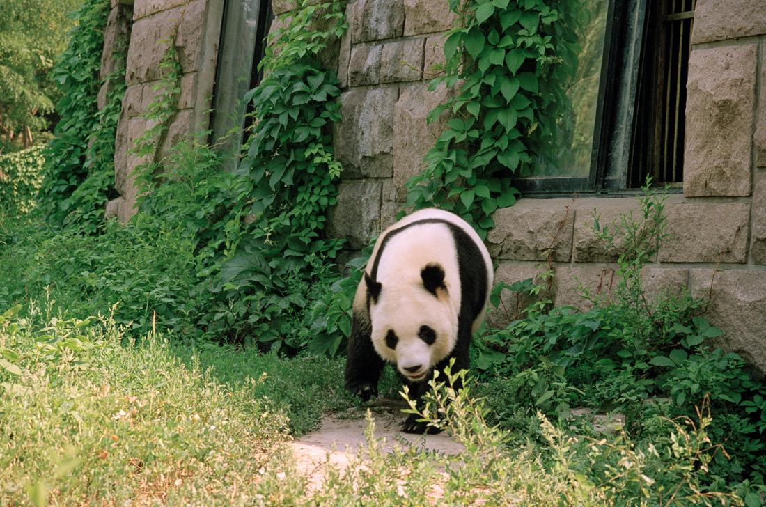 Beijing, China 1997 ©Cyndie Burkhardt.