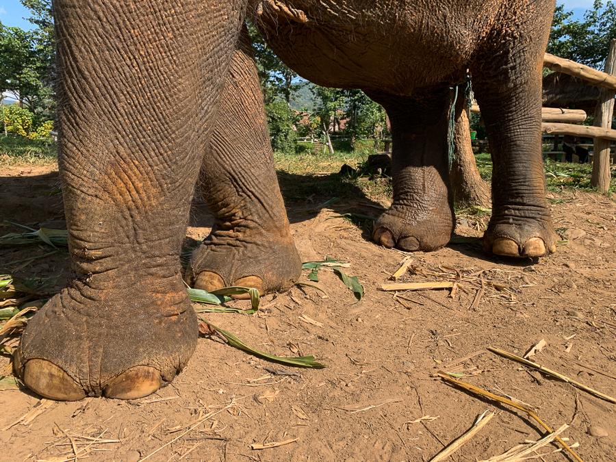 Elephant Freedom Project1, Chiang Mai, Thailand ©2019 Cyndie Burkhardt.